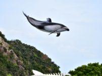 ルネッサンス沖縄 改装後 ブログ